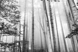 Obstacles III by hannes-flo