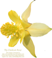 Yellow Colombine PNG by Thy-Darkest-Hour