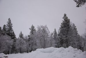Winter Background v2 by LimeStock
