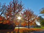 Autumn in Zagreb by PhysaliaPhysalis-88