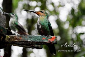 Hummingbird 4 by Alkhumeia