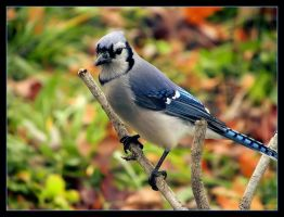 Jay by D-E-V-I-A-N-T-A-R-T