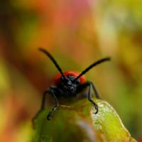 Bugs have faces, too I by Photopathica
