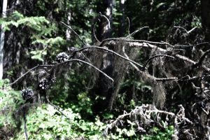 STOCK - Creepy Dead Branches 1 by jocarra