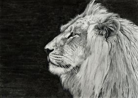 The Lion by Olivier-C