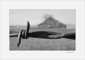 Barbed Wire by solodaddy