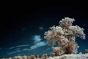 Purest Feeling IR HDR by UrbanRural-Photo