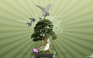 Bonsai tree by iheb003