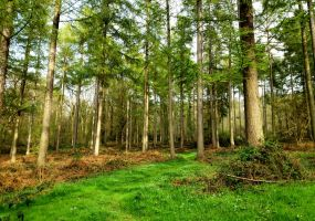 Green Forest by LW-M-E-D-I-A