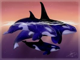 Mom Dad and Child Orca Killer Whale Forever Free by Riku-Glaedr