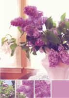 Lilac from garden to home by Mustafa-H