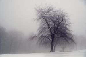 Winter 1 by Chamandra
