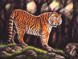 Tiger - soft pastel by Bisanti
