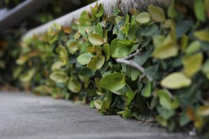 Stairs with Ivy by CatskillCat
