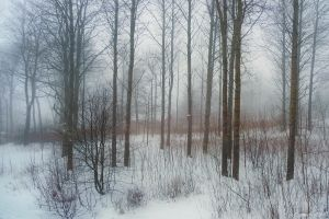 Misty Winter Morning by Pajunen