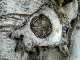 Bizarre nature - old tree trunk unusual photo by YANKA-arts-n-crafts