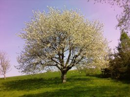 Spring Tree by Nenthil