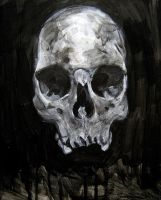 Morbid Curiosities: Skull (frontal) by jskaphobe