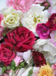Rose Collection by 12monthsOFwinter