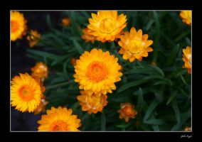 Yellow Bright by RhavinCreative