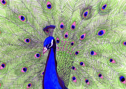 Peacock Colour - my style (beautiful dreamer) by kodapops