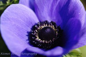 Purple Within by Deb-e-ann
