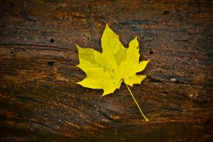 The Fall by Divuar