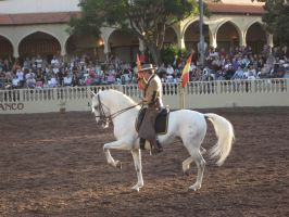 Lipizzaner Stallion 2 by filly1