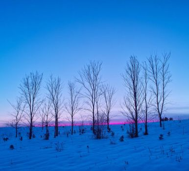 Pink line in blue winter by blue-torch