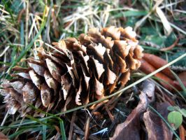 A Pine Cone by Holly6669666