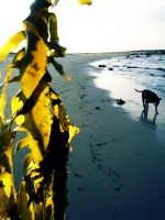 Seaweed and Hound by phlufii