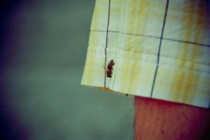 Bee by lalylaura