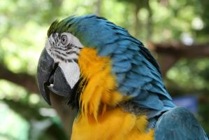 Macaw 1 by hiresblur