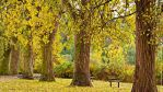 Autumn Trees by Val-Faustino