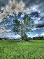 HDR Tree by thecheekymunky