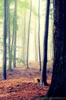 magic forest No.4 by landscapesaxony