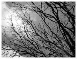 Branching out by halo8