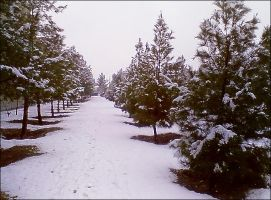 Snow By Canon Cameras by MSaadat10