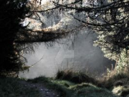 Spooky Forrest by agnott