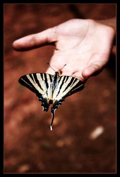 butterfly by picsmania