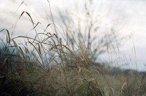 wheat and fall by LowerDistance