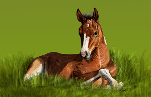 Bay Foal by Kermit-91