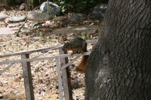 Squirrel by MuggleHater