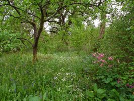 orchard by harrietbaxter