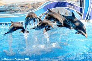 Dolphins by Rovanite