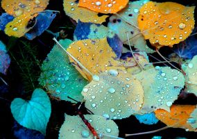 autumn rain by pauleskew
