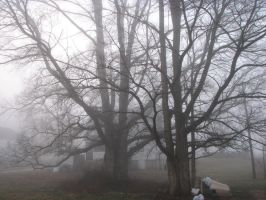 Foggy Woods Stock 2 by MissyStock