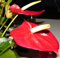 Exotic Red Tropical Flower 2 by FantasyStock