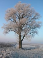 tree by adrian-lukas