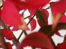 Red Leaves Stock by TheHemophageress
